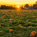 A Joyful + Healthier Halloween